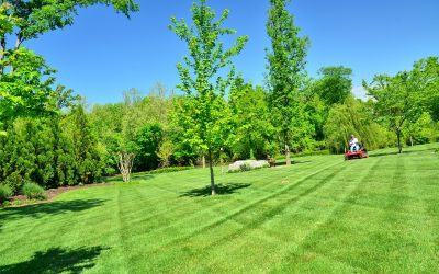 Nine steps to a successful lawn